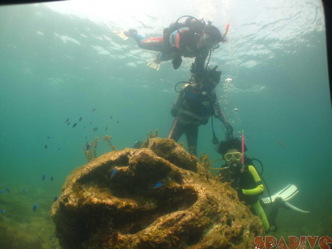 2016年08月撮影海フォトギャラリー|南紀白浜スパダイブ