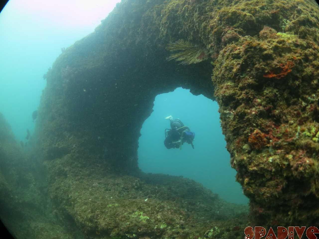 2016年12月撮影海フォトギャラリー 南紀白浜スパダイブ