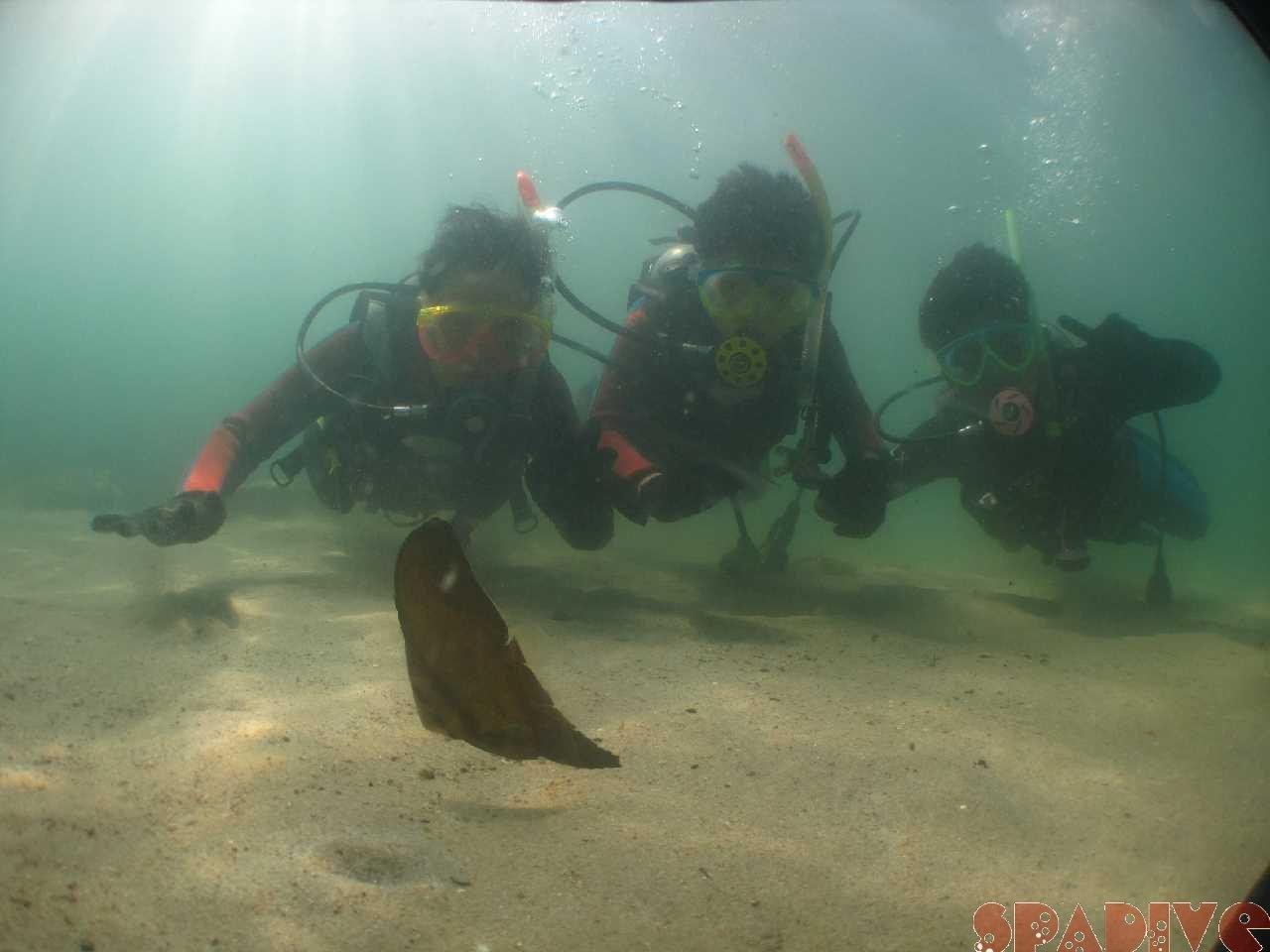 白浜権現崎8月の水中画 像5