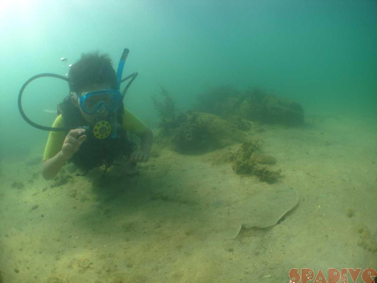 白浜権現崎8月の水中画 像7