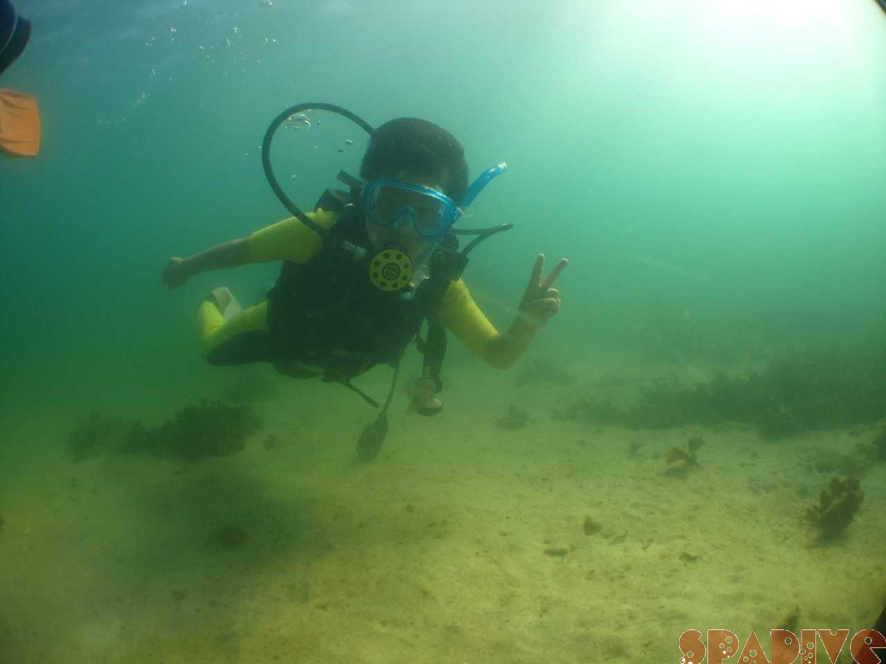 白浜権現崎8月の水中画 像8