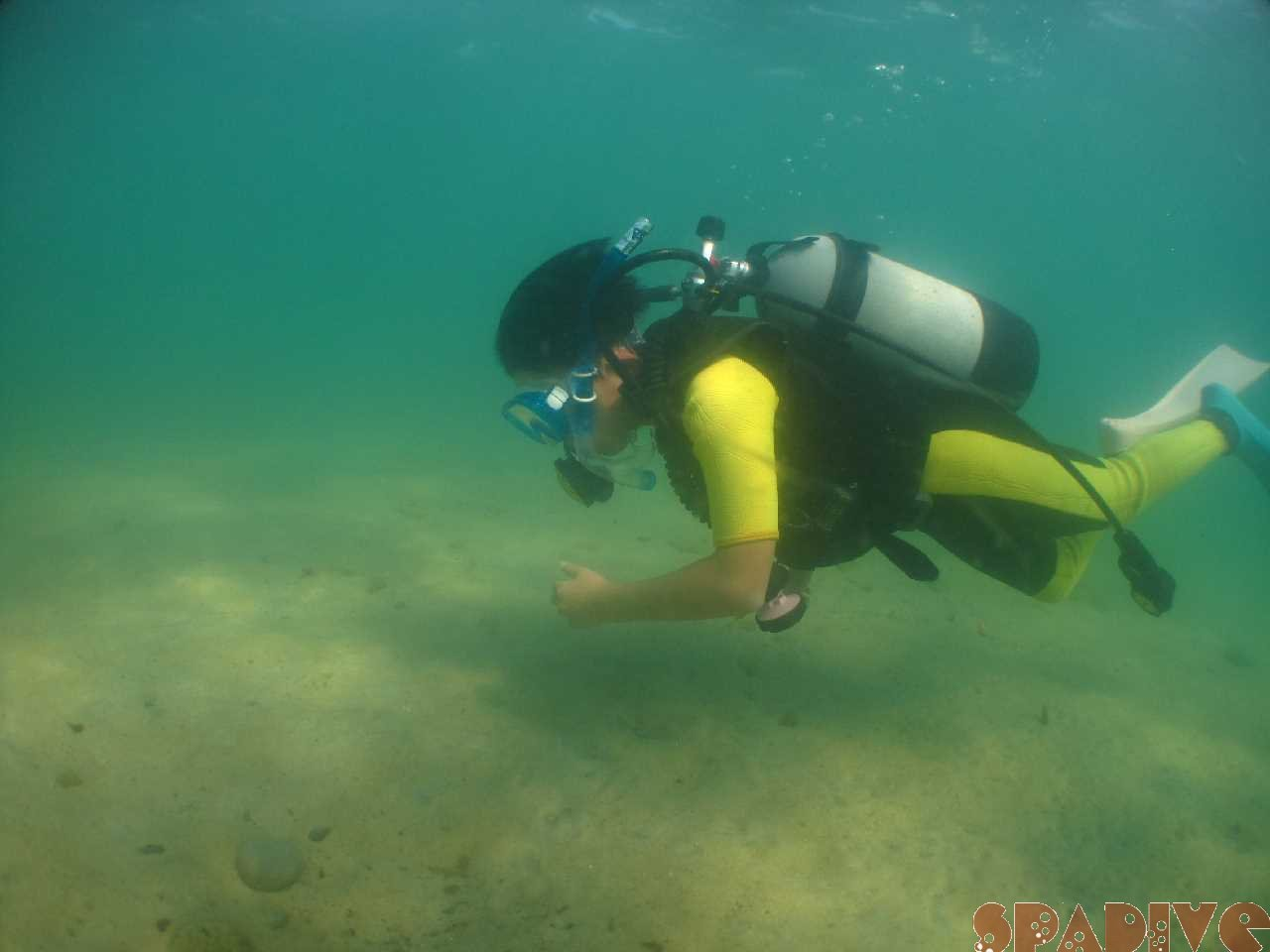白浜権現崎8月の水中画 像9