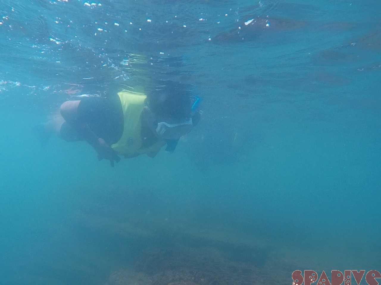 白浜権現崎9月の水中画像1