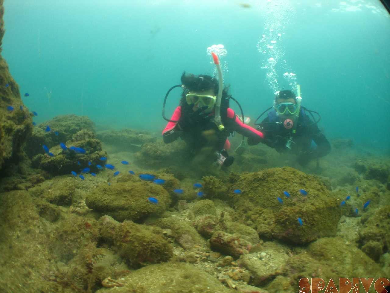体験ダイビング!いい水の色で綺麗な海|10/18/2020南紀白浜