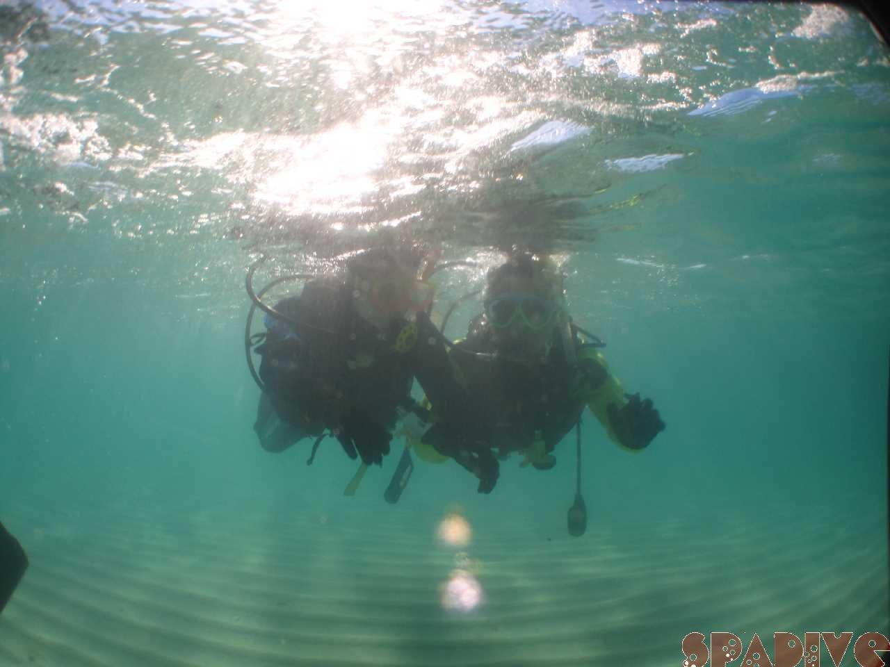 2020年11月撮影海フォトギャラリー|南紀白浜スパダイブ