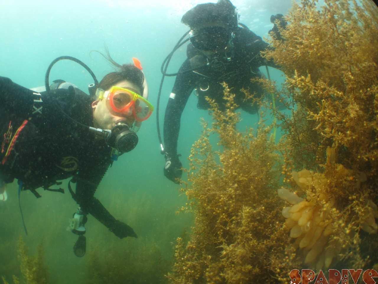 体験ダイビング ダイバーのリフレッシュも 7/17/2021南紀白浜