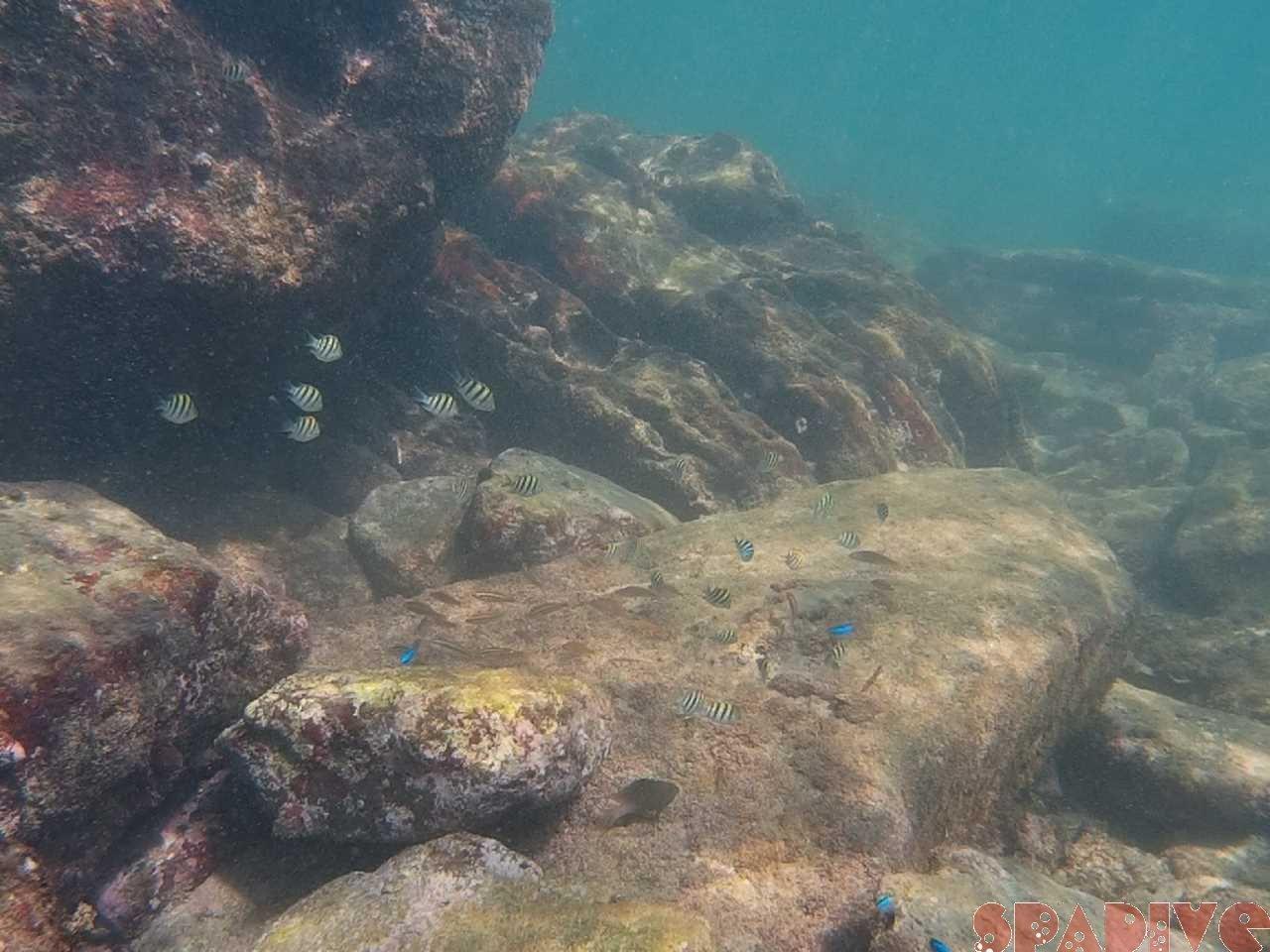 2021年7月撮影海フォトギャラリー|南紀白浜スパダイブ