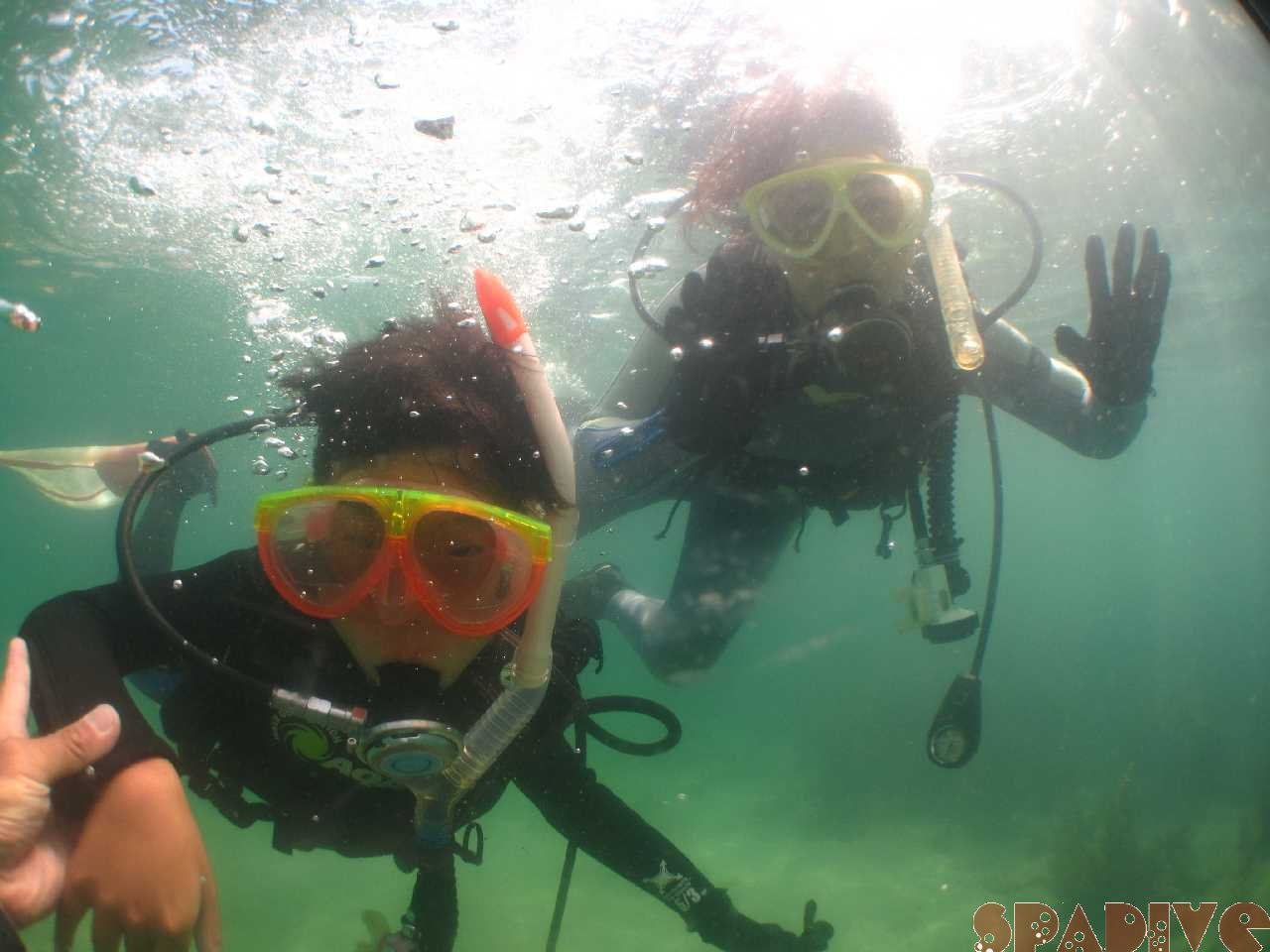 2021年8月撮影海フォトギャラリー|南紀白浜スパダイブ