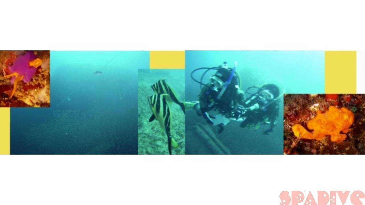 権現崎ビーチ&沈船ボートファンダイビング 4/4/2004白浜