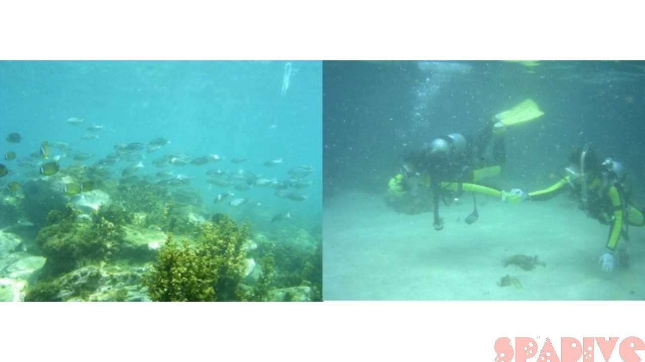 権現崎&円月島前ビーチファンダイビング|7/8/2004白浜