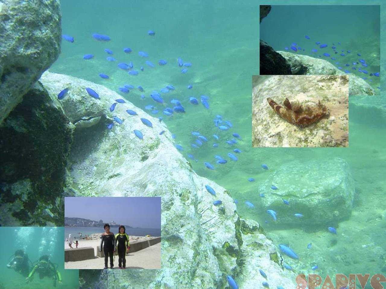 体験ダイビング|7/23/2004白浜権現崎