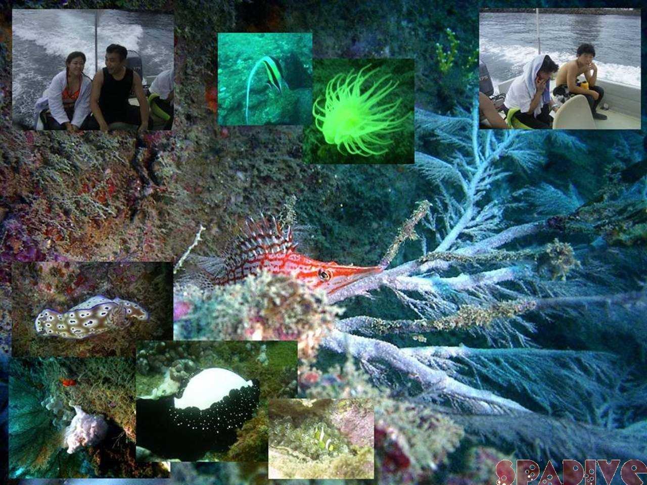 カスミの根&千石丘ボートファンダイビング|8/16/2004南紀白浜
