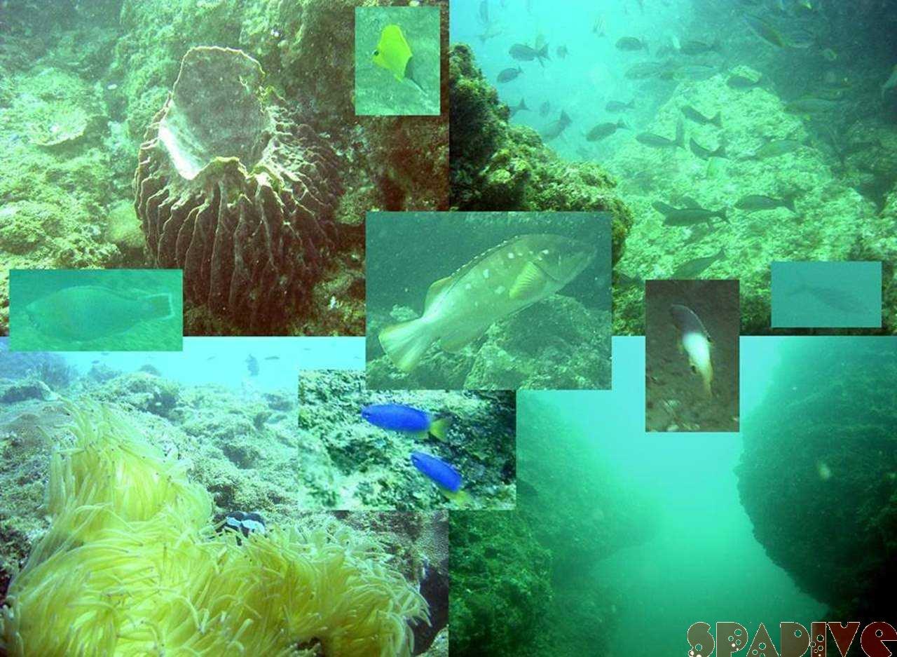 新ダイビングポイント「カモイ沖」|11/7/2004南紀白浜