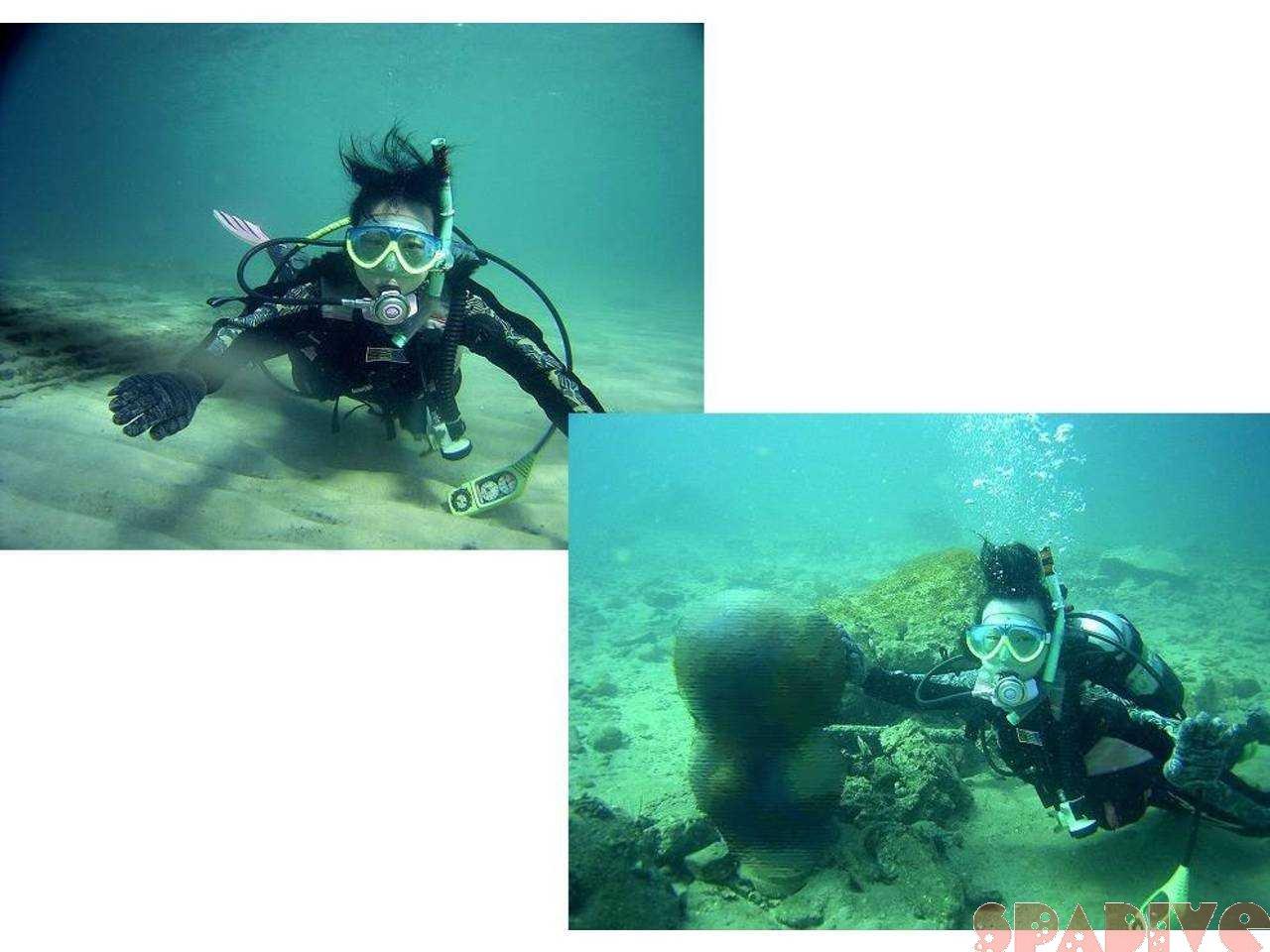 体験ダイビング|12/28/2004白浜権現崎