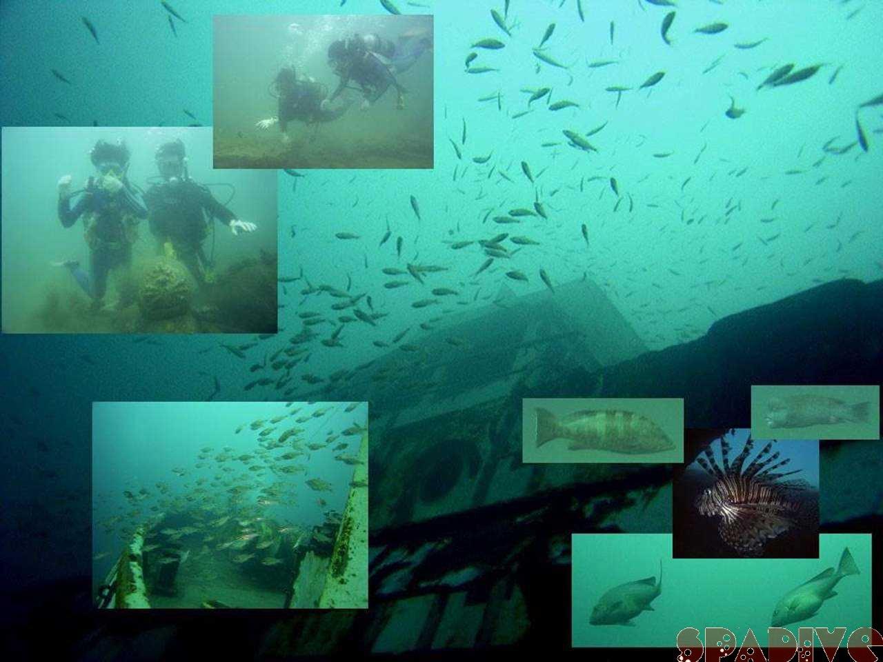 ファイル sea20050623.jpg