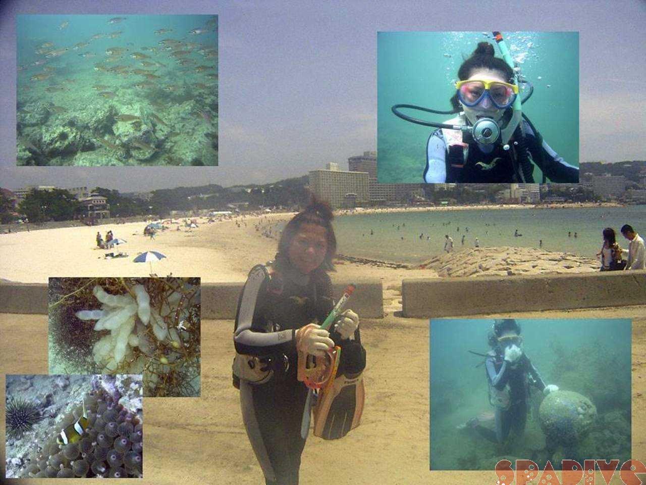 体験ダイビング|6/26/2005白浜権現崎