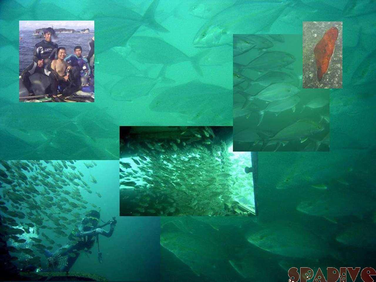 ファイル sea20050913.jpg