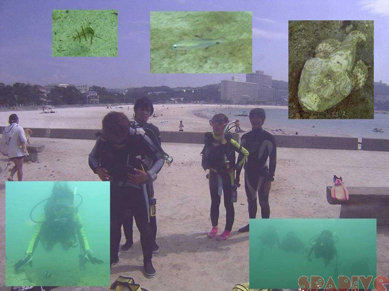 スクーバリビュー&AOWアドバンス講習ダイブ|9/19/2005白浜