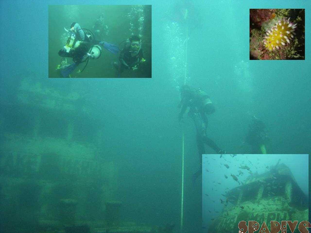 三段壁&沈船&権現崎ファンダイビング|AOW&DM|9/23/2005白浜