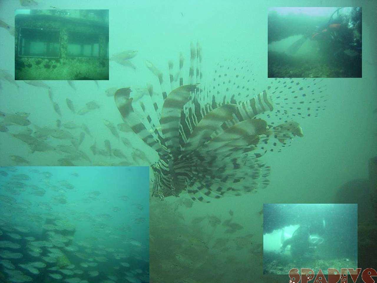 沈船&中島観測塔ボートファンダイビング 10/2/2005白浜
