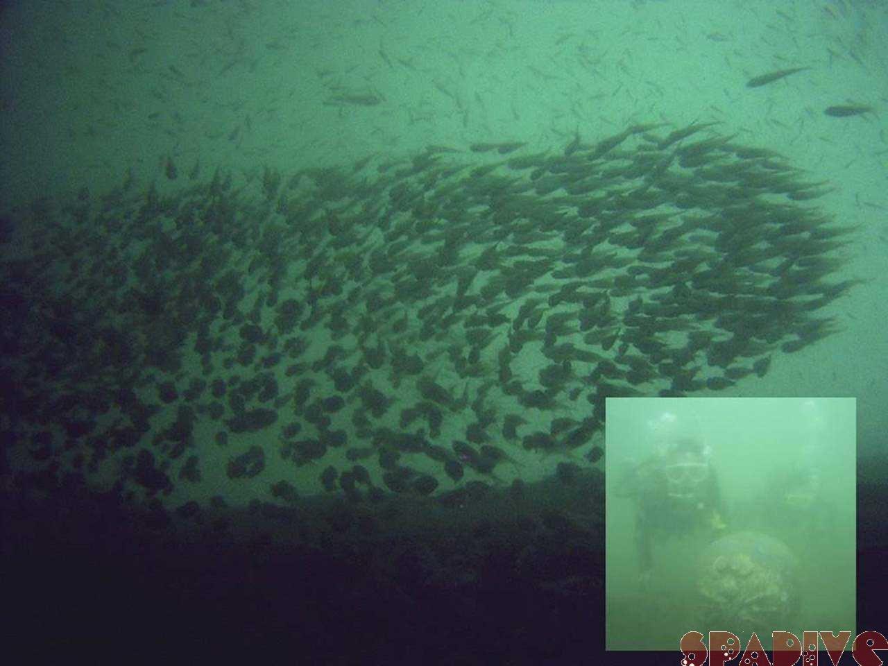 権現崎&沈船AOWアドバンスコースダイビング|10/23/2005白浜