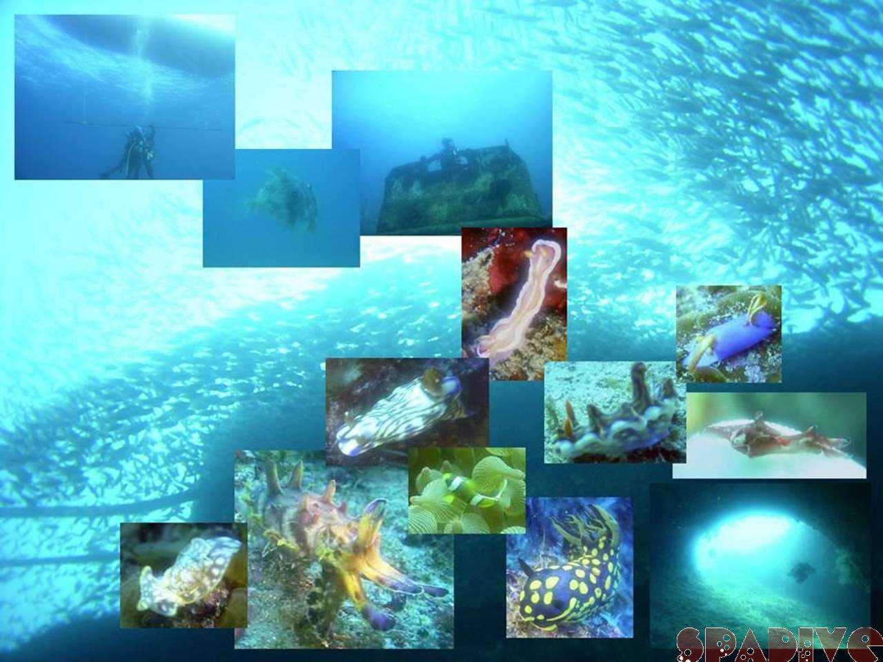 2006年初潜り|沈船&三段壁ボートファンダイビング|1/12白浜