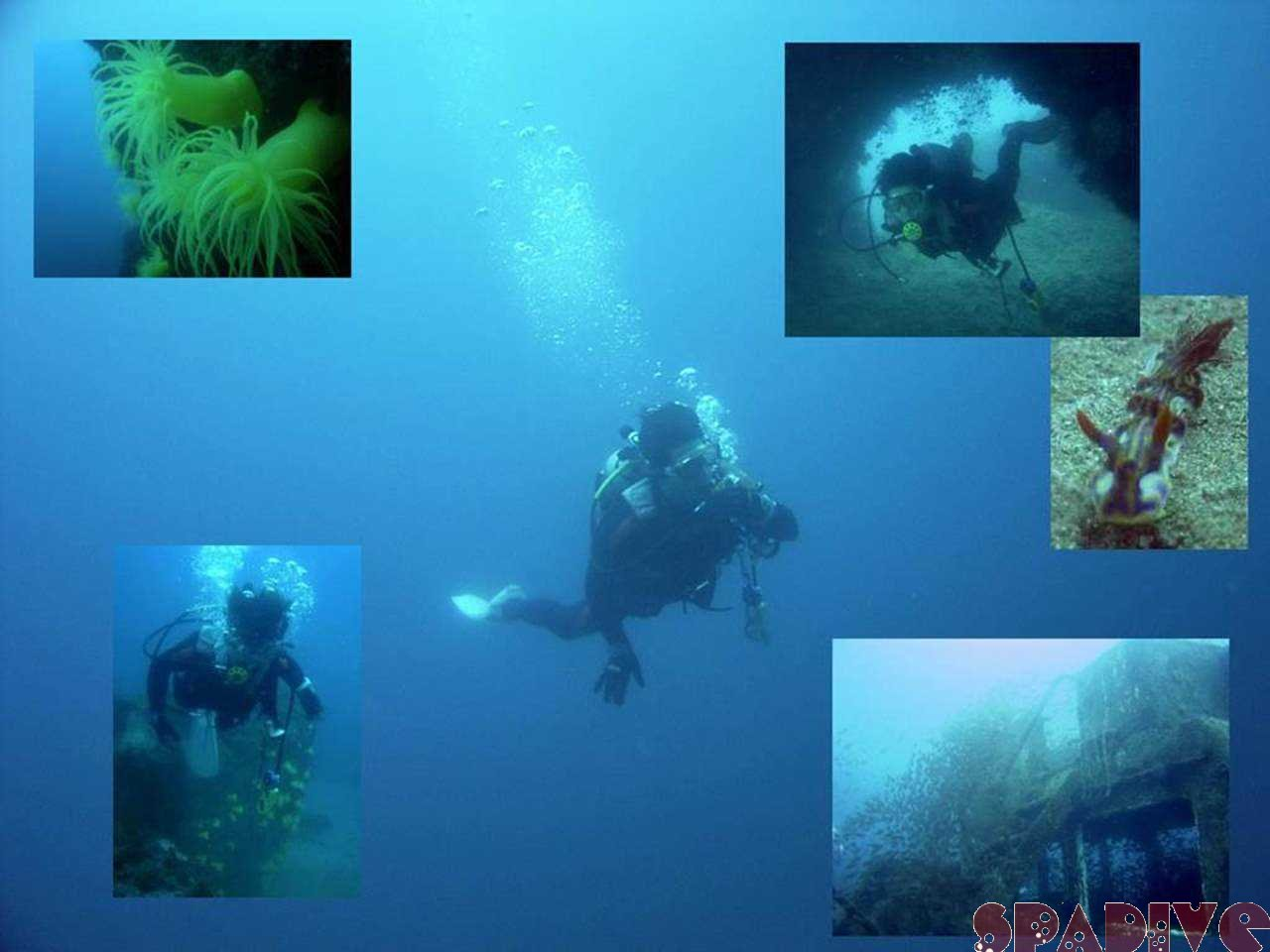 カスミの根&沈船ボートファンダイビング|4/15/2006白浜