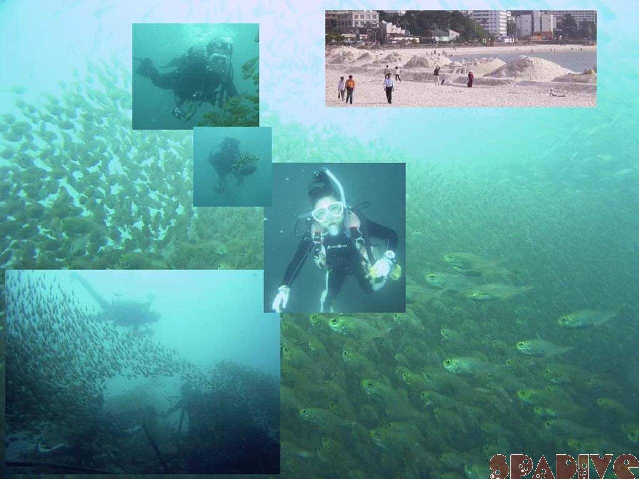 沈船&色津ボートファンダイビング|砂まつり大会|5/28/2006南紀白浜