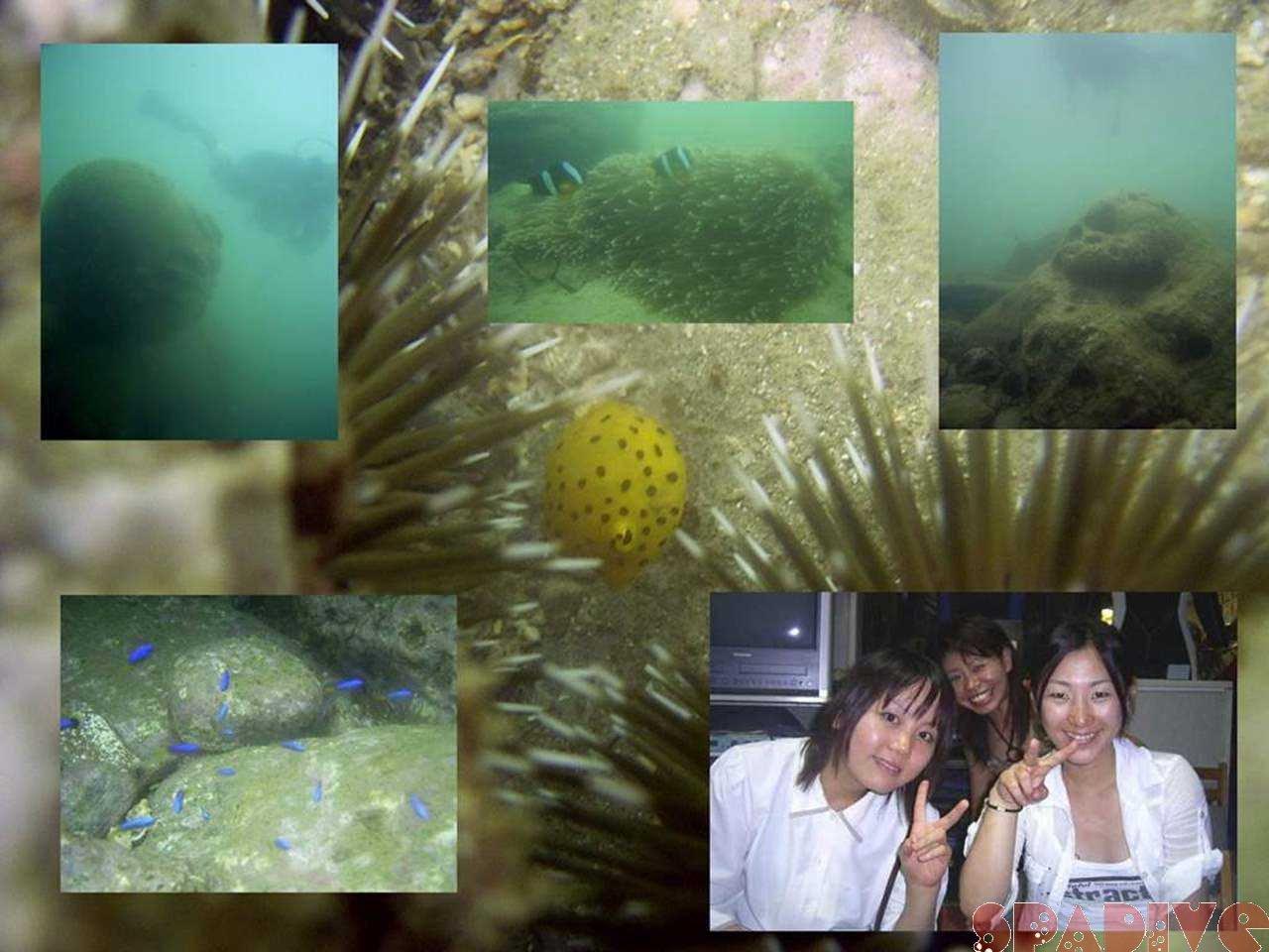 権現崎ビーチファンダイビング|7/11/2006白浜