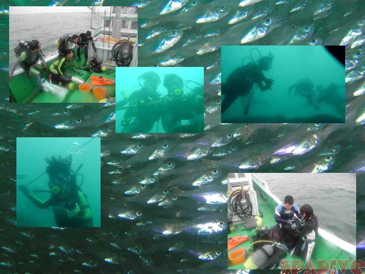 沈船&色津ボートファンダイビング|7/23/2006南紀白浜