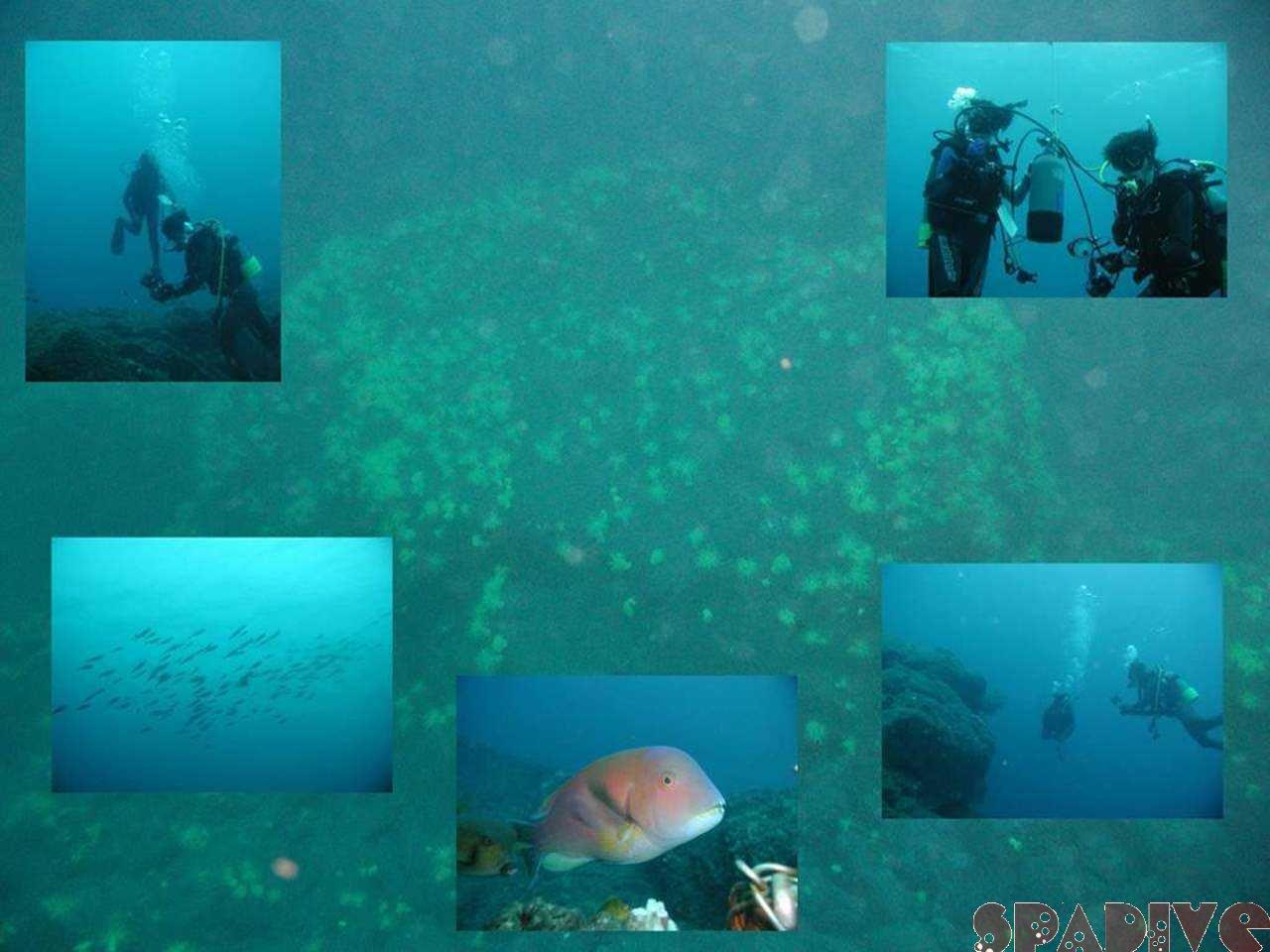 南部ミサチ&ショウガセ ディープSPボートダイブ MSD 10/1/2006