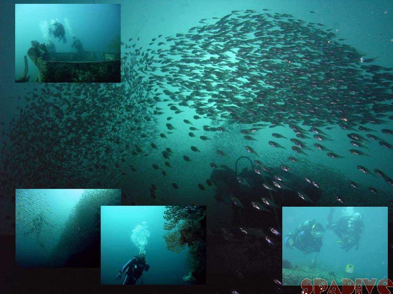 エビセ&沈船ボートファンダイビング|10/25/2006南紀白浜