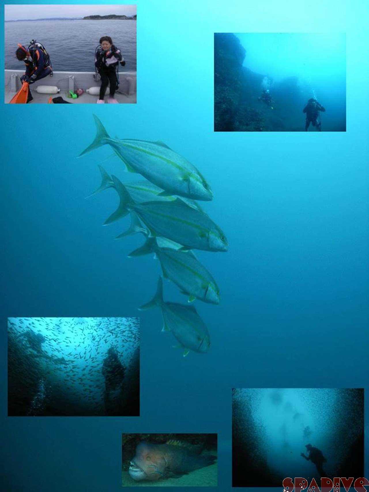 エビセ&沈船ボートファンダイビング 11/18/2006白浜