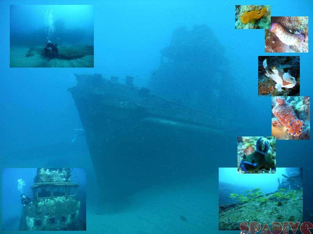 沈船ボートファンダイビング|2/12/2007南紀白浜