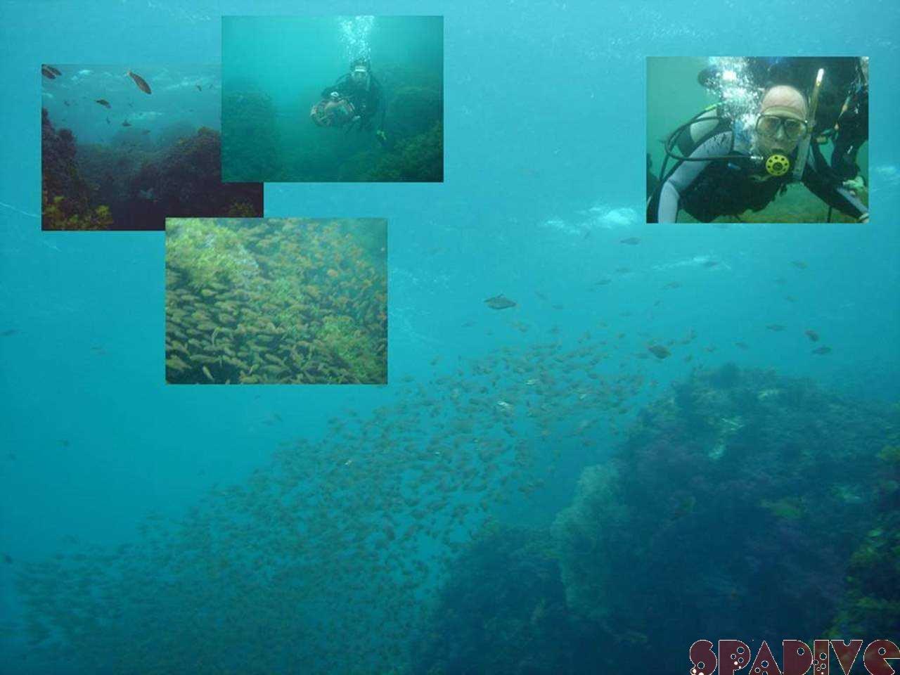 水中スクータービーチダイブ|体験ダイビング|4/25/2007南紀白浜