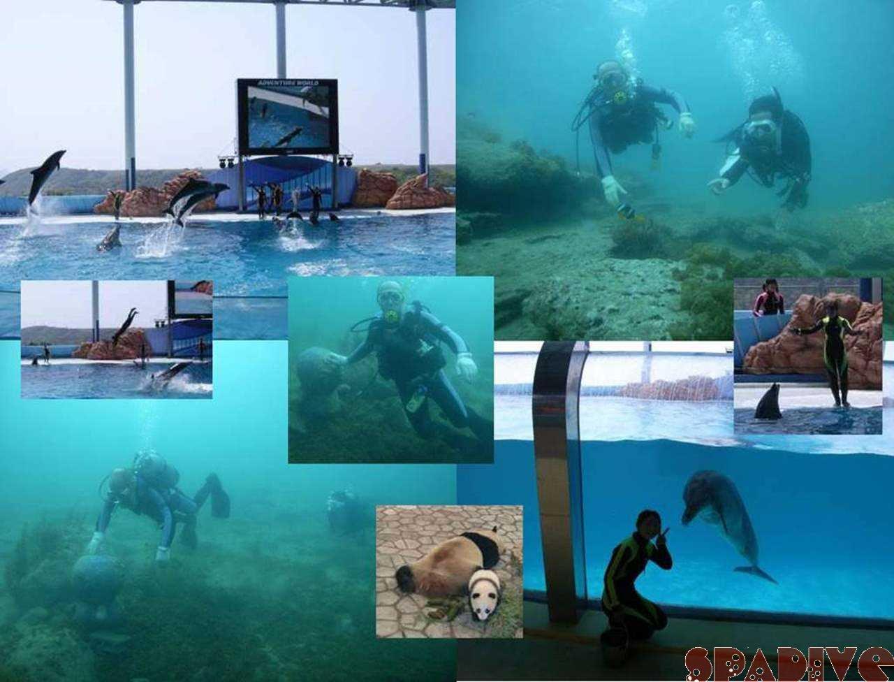 アドベンチャーワールド|体験ダイビング&ナビゲーションSP|4/26/2007