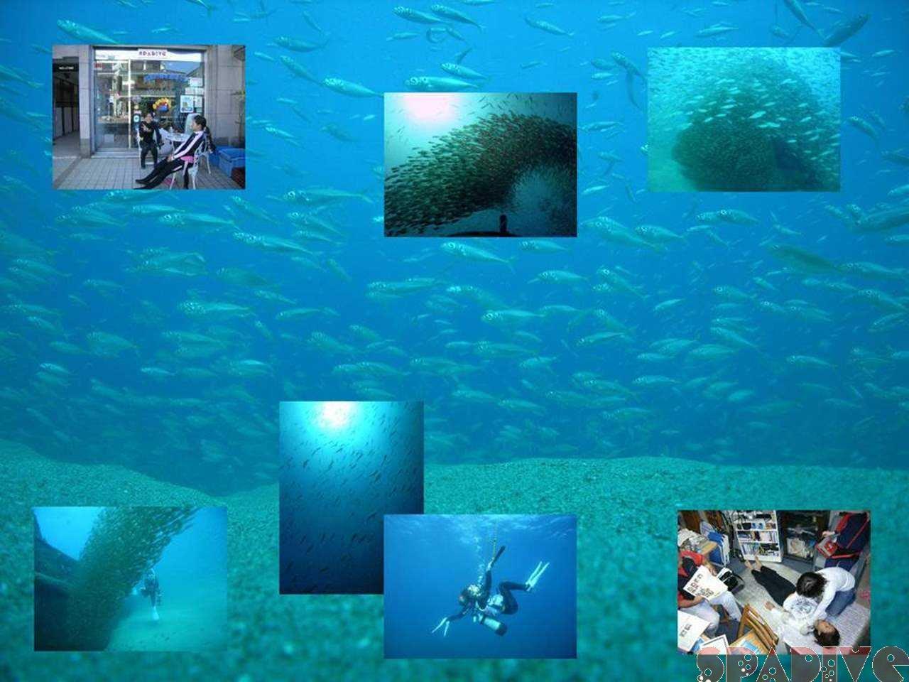 沈船ボートファンダイブ&EFRコース|10/12/2007南紀白浜