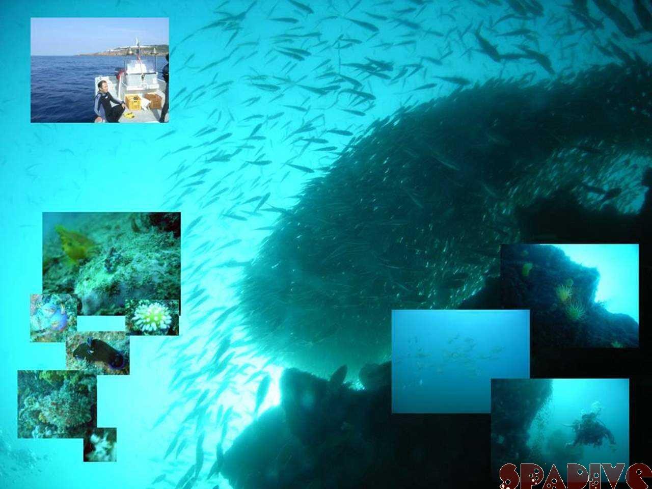 カスミの根&沈船ボートAOWアドバンス|10/31/2007南紀白浜