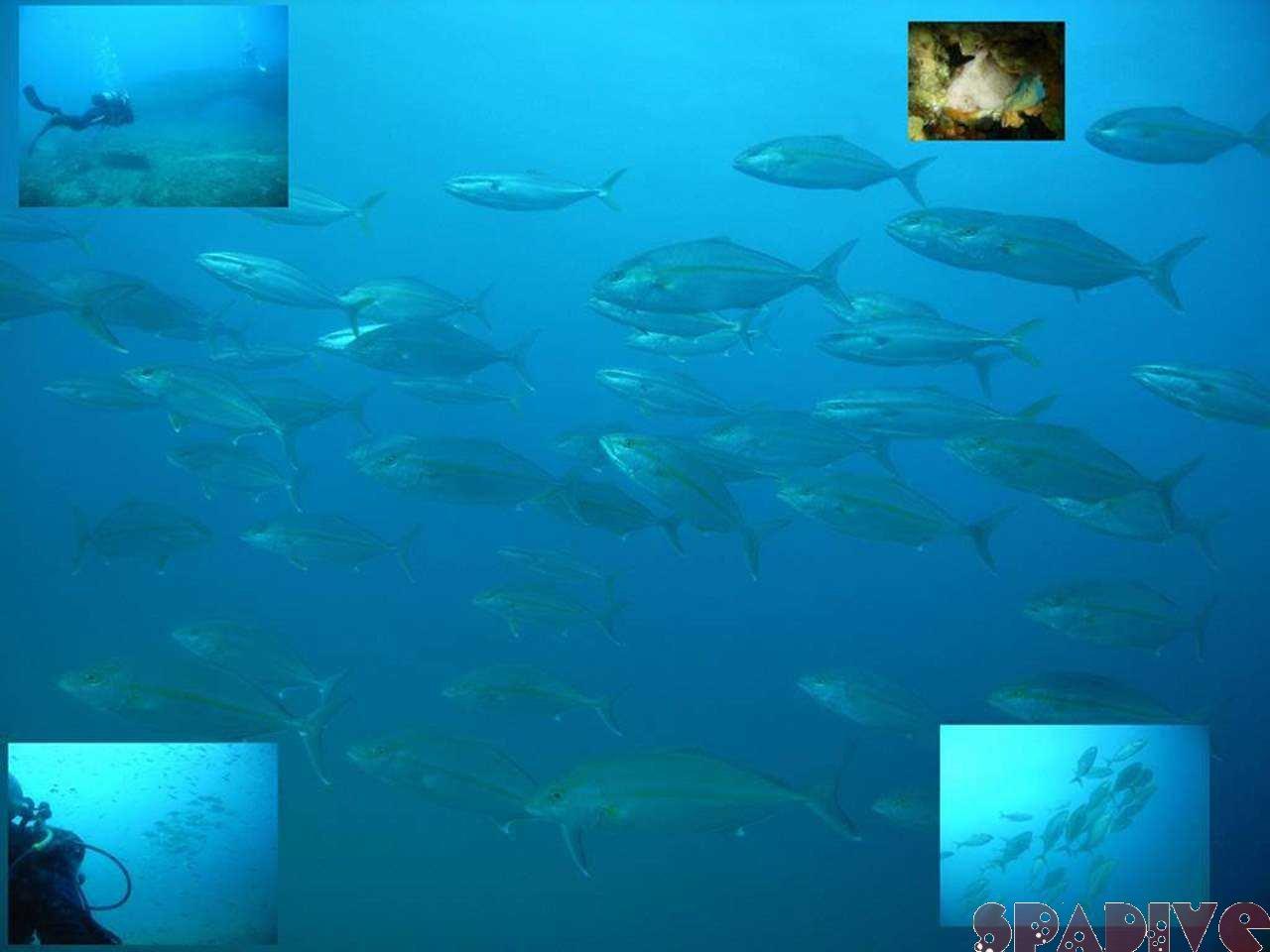 Wアーチ&沈船ボートファンダイブ|11/21/2007白浜