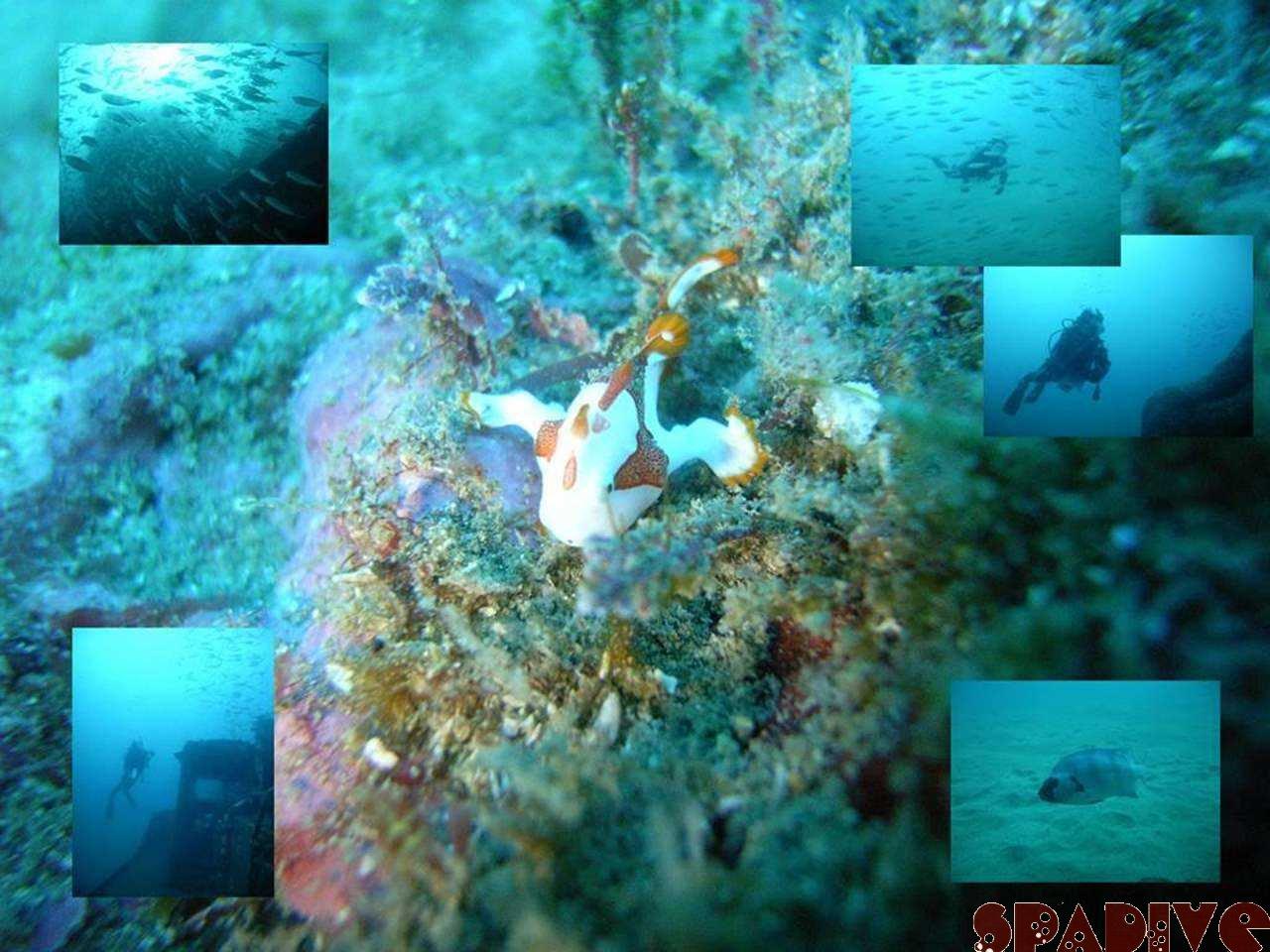 沈船北の根&沈船ボートファンダイブ|12/5/2007南紀白浜