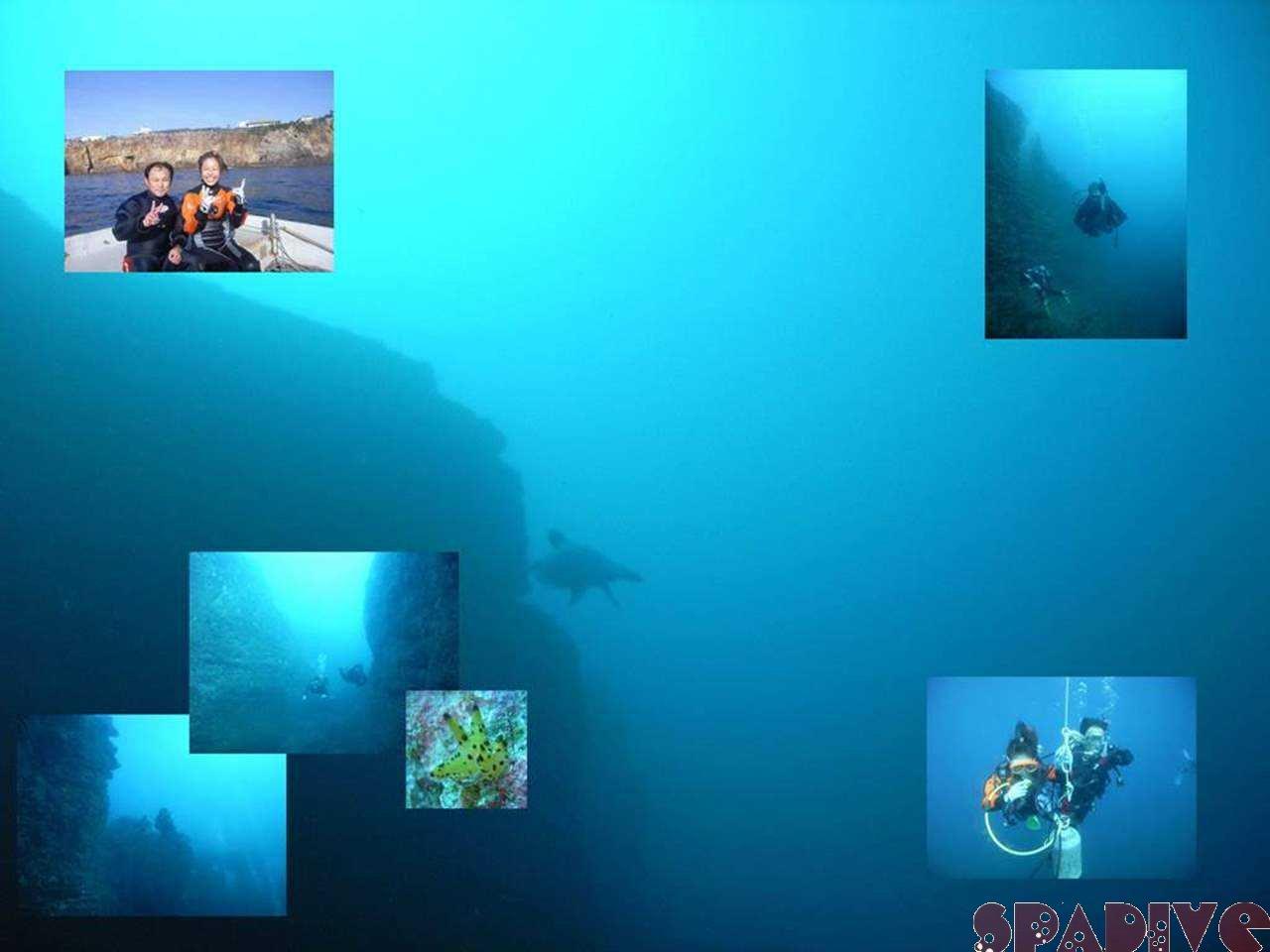 エビセ&三段壁ディープSPダイブ|ウミガメ!|12/6/2007南紀白浜