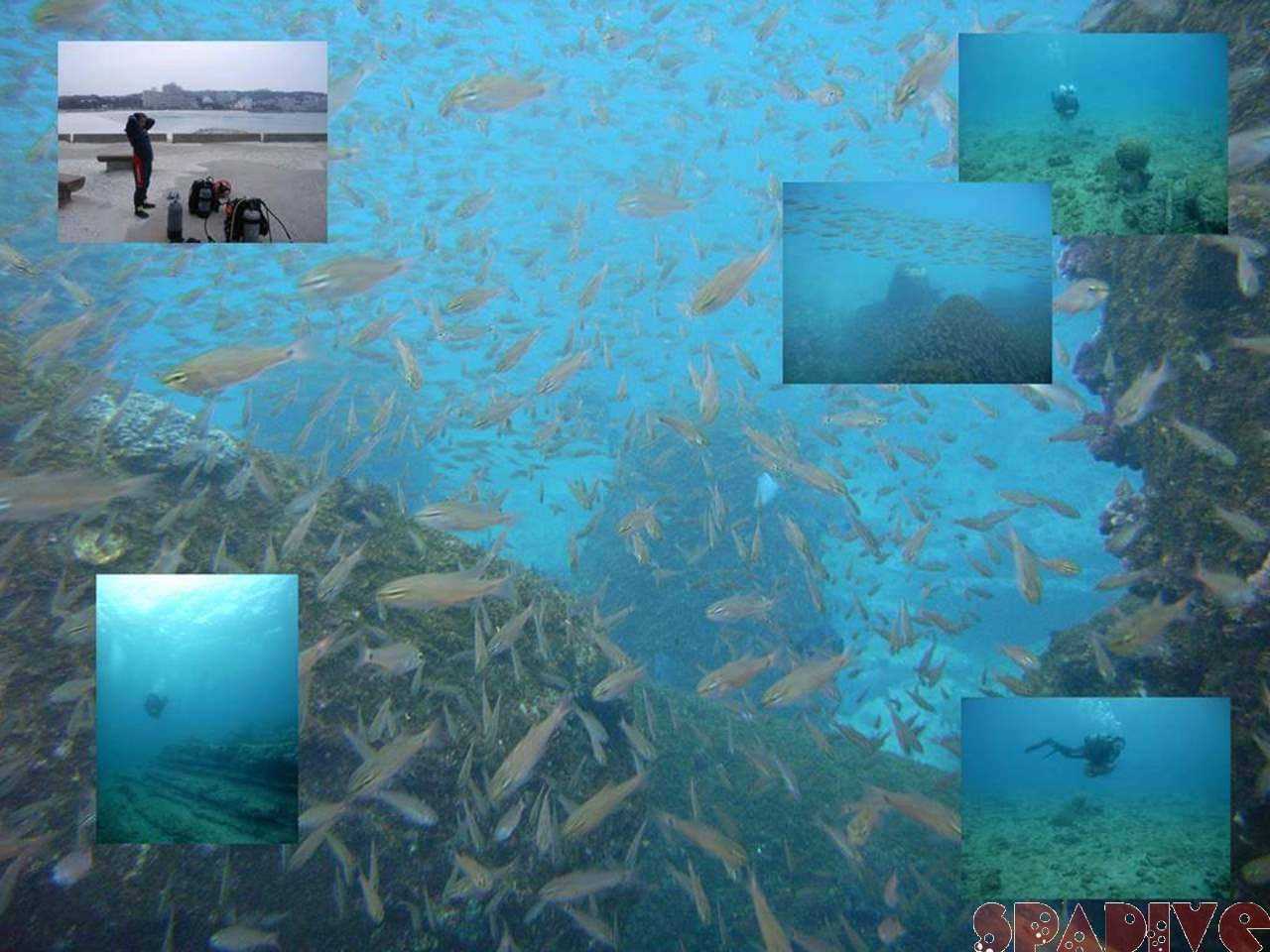 権現崎ビーチ水中スクーターダイブ|12/21/2007南紀白浜