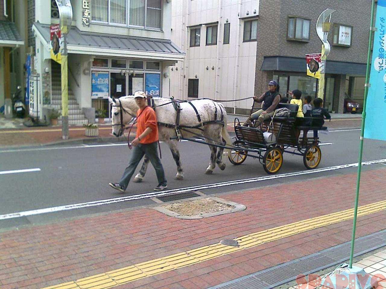 浜通りを馬が!?|3/22/2008南紀白浜