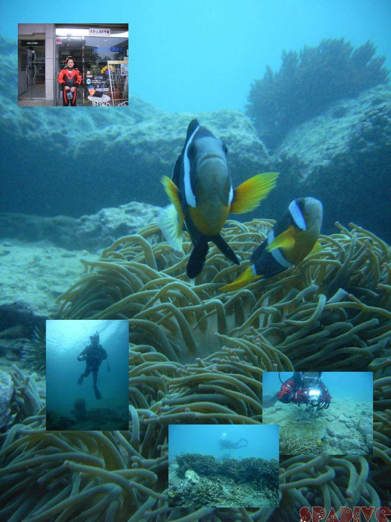 水中デジカメコースダイブ|1/21/2008白浜権現崎