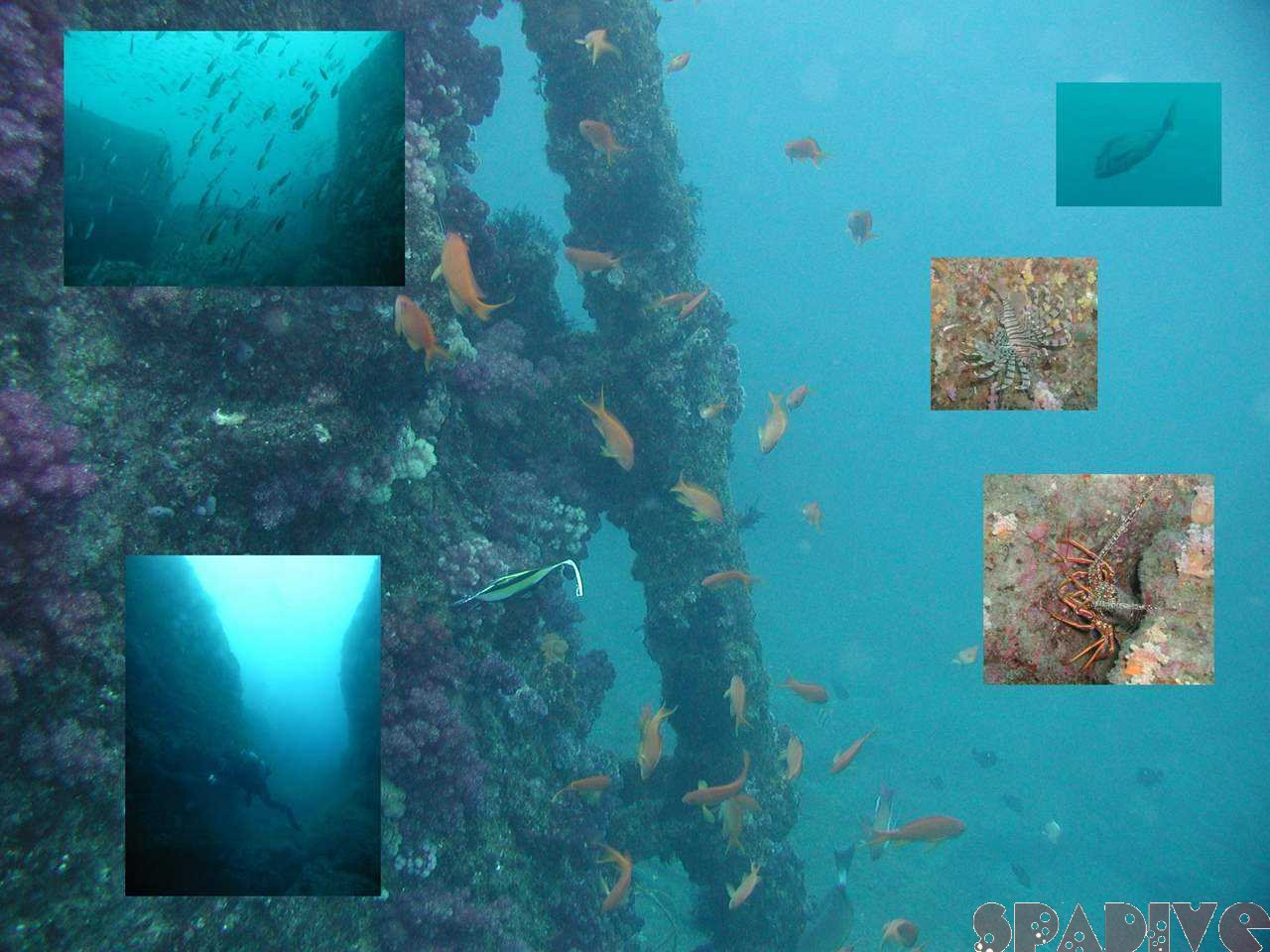 三段壁&中島観測塔ボートファンダイブ|1/22/2008白浜
