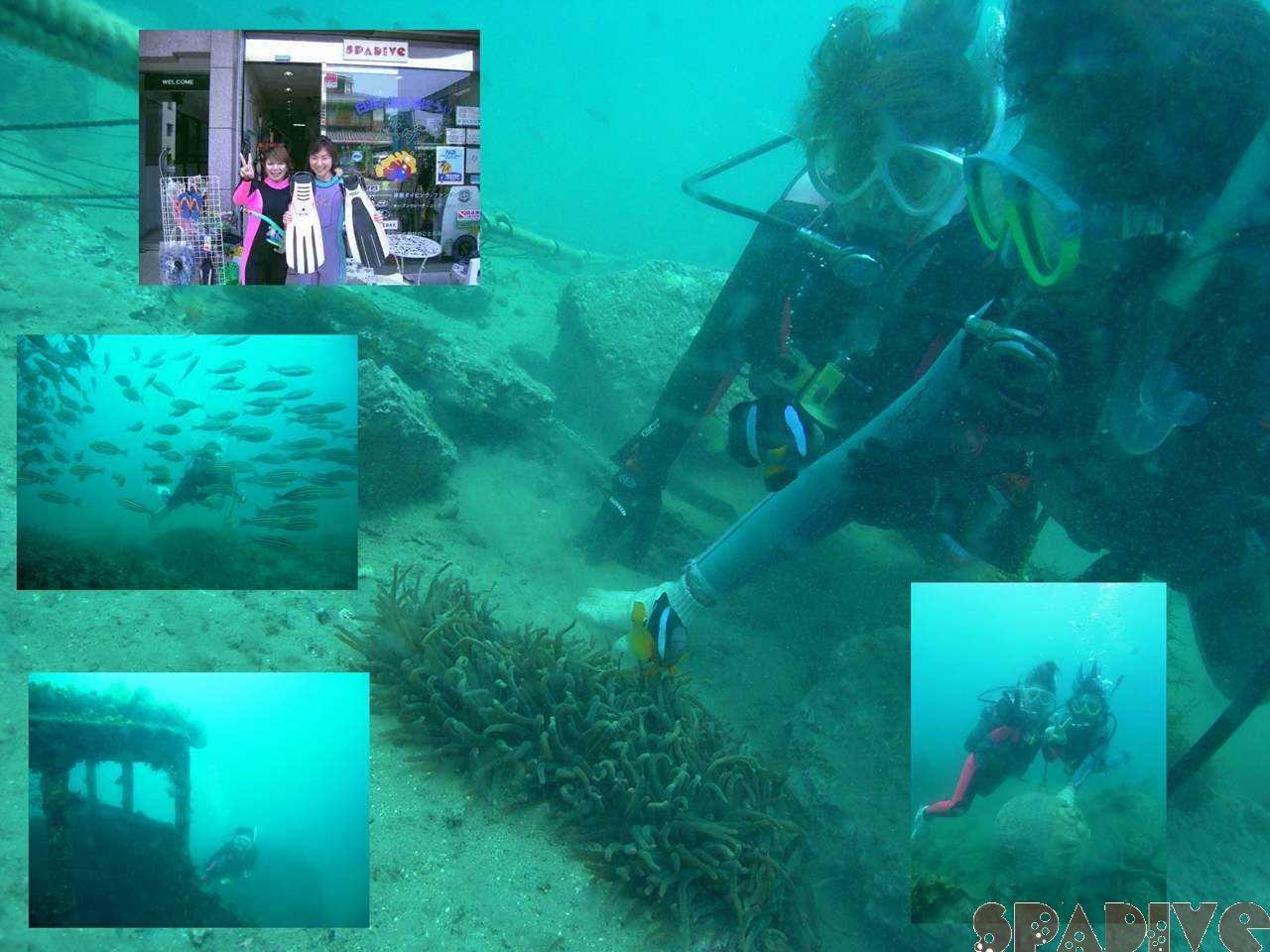 体験ダイビング|沈船ボートファンダイブ|5/18/2008南紀白浜