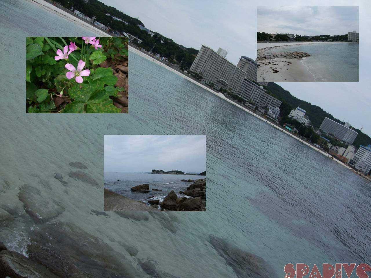 ブラリ権現崎-しらら浜|6/24/2008