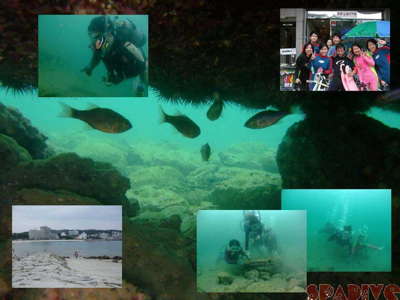 ビーチファンダイブ&体験ダイビング|9/15/2008白浜権現崎