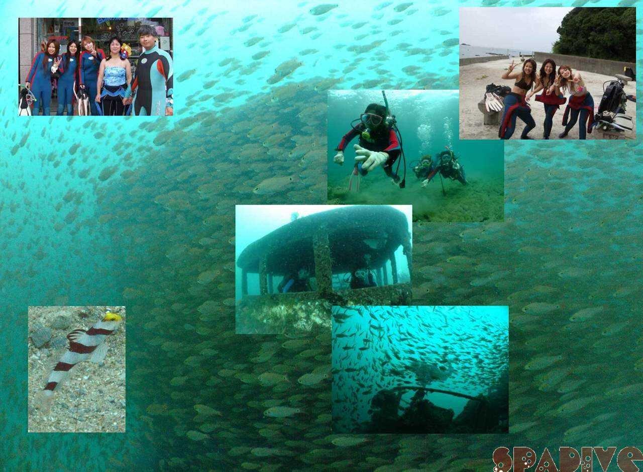 体験ダイビング|沈船レックSPダイブ|9/17/2008南紀白浜