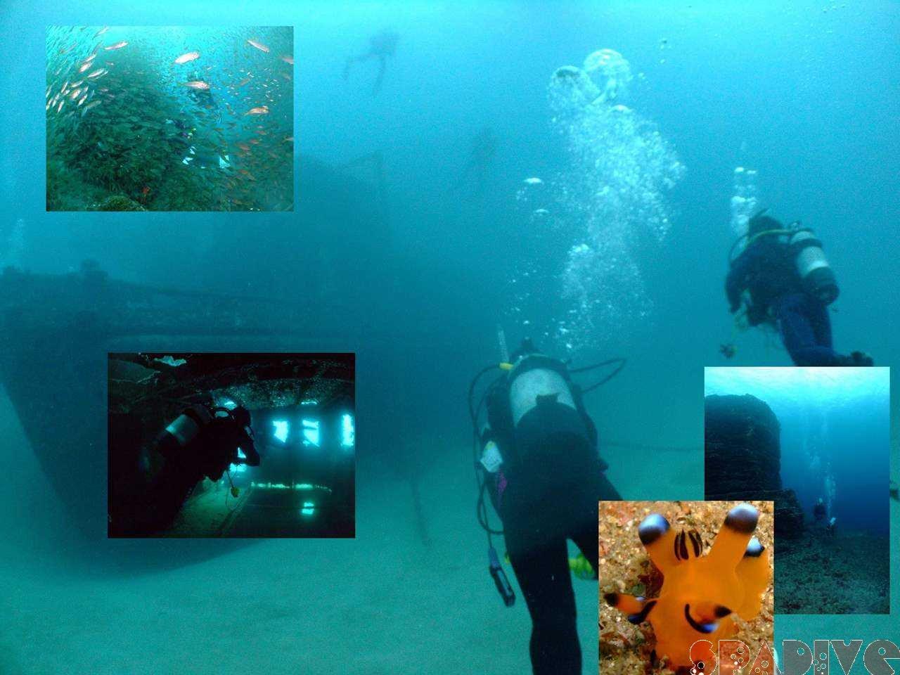 沈船&三段壁レックSP&ボートファンダイブ|11/09/2008白浜